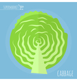 Cabbage icon vector image vector image