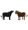 two cute bulls on white background vector image vector image