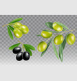 black and green olive branch icon set vector image vector image