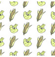 corn cobs and broccoli on white wrapping paper vector image