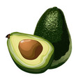 green avocado whole and slice with corn vector image vector image