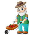 bearded gardener pushing a strawberry cart vector image