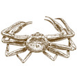 engraving drawing of chionoecetes opilio crab vector image vector image