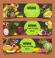 signs and banner with tropical or exotic fruits vector image