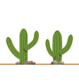 cactus plants on white background vector image vector image