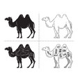 cut of camel set poster butcher diagram - desert vector image