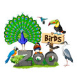 different kinds of birds in the zoo vector image vector image