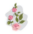 nice exotic roses with branches leaves vector image vector image