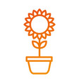 potted sunflower natural plant petal decoration vector image vector image