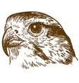 engraving drawing of falcon head vector image vector image