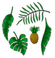 leaves tropical plants design element vector image
