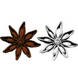 star anise vector image vector image