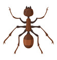 ant icon brown insect wildlife small bug vector image vector image