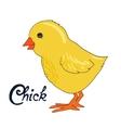 bird chick vector image