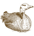 engraving of goose vector image vector image