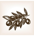 Olive branch hand drawn sketch style vector image