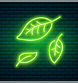 tropical neon sign green plant or leaves night vector image
