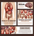 anatomy of human organs sketch banner template vector image