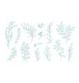 collection various eucalyptus branches vector image vector image