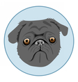 Digital pug dog face in blue circle vector image