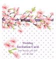 cherry blossom sakura flowers background vector image