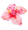 Set of tropical flowers Hibiscus Leaves vector image