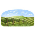 colorfull vine plantation hills trees clouds vector image