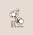 cotton plant branch vector image vector image