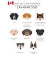 dogs by country of origin canadian dog breeds vector image