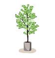 green potted tree growing currency with dollar vector image vector image