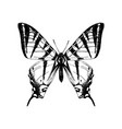 hand drawn western tiger swallowtail butterfly vector image vector image