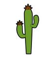 isolated desert cactus vector image