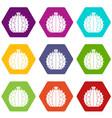 lophophora cactus icon set color hexahedron vector image vector image