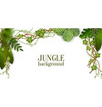 green jungle plants background hanging from above vector image