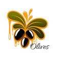 olive fruit with oil drop isolated cartoon icon vector image