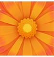 Orange gerbera flower realistic vector image