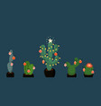 banner with christmas decorated cacti vector image