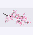cherry blossom sakura tree branch with realistic vector image vector image