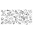 hand drawing fruits set vector image