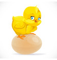 little cute yellow cartoon chick sitting on an vector image vector image