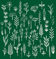 set of rustic decorative plants vector image