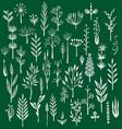set rustic decorative plants vector image