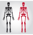 skeletons - human bones set eps10 vector image