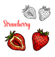 strawberry fruit isolated sketch of fresh berry vector image vector image