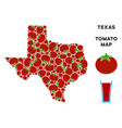 texas map composition of tomato vector image vector image