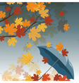 Autumn leaves and umbrella vector image vector image