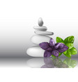 basil herb leaves and stones vector image