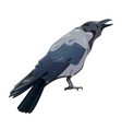 Hooded Crow vector image