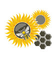 sunflower and bee vector image