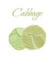 tasty veggies cabbage vector image